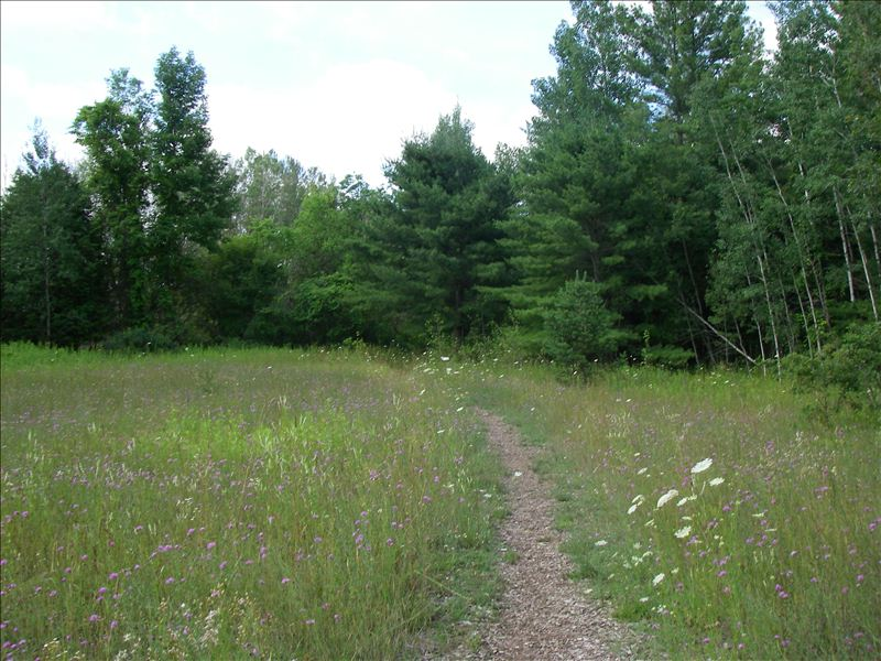 Meadow at Miller Creek Nature Reserve
